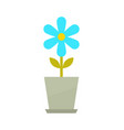 indoor flower in grey clay pot with blue blossom vector image
