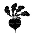 silhouette turnip cartoon icon design isolated on vector image