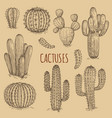 hand drawn cactuses vintage collection vector image
