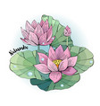 lotus flower beautiful vector image vector image