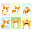 set banners with cute corgi dog vector image