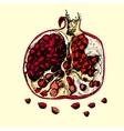 Beautiful juicy pomegranate vector image