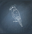 lory parrot icon sketch on chalkboard vector image