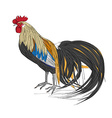 black tail rooster vector image