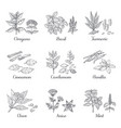 hand drawn spices herbs and vegetables sketch vector image vector image