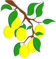 Lemon vector image vector image