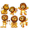 Lion set vector image vector image
