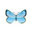 morpho peleides blue butterfly vector image vector image