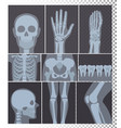 realistic x-rays shots vector image vector image