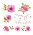 Collection set of flower heads vector image