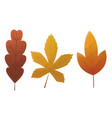 fall leaf collection set autumn leaves vector image vector image