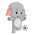 funny elephant cartoon with ball vector image