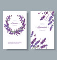 lavender flowers banners vector image vector image