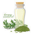 rosemary essential oil vector image vector image