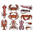 sea animal sketches with fish and crustacean vector image vector image