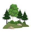 trees and bushes vector image vector image