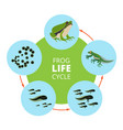nature infographic of frog life vector image vector image