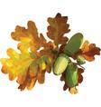 oak leaf isolated on white vector image