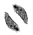 Peerless Decorative Feather vector image vector image