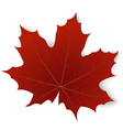 Red maple leaf on a white background vector image