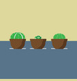 three cactus in the pots vector image vector image