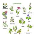 alterative herbs hand drawn set of medicinal vector image