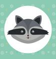 cute raccoon head tender character vector image vector image