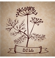 Dill herb with leaf and flower isolated vector image