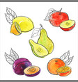 drawing fruits vector image vector image