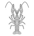 hand drawn zentangle crawfish drawing vector image vector image