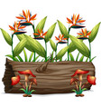 bird paradise and mushrooms on white background vector image