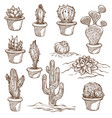 cactus plants indoor and outdoor species sketch vector image