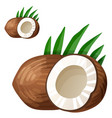 coconut detailed icon isolated on white vector image vector image