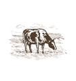 cow grazing in meadow rural landscape vector image
