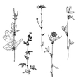 Set of ink drawing herbs vector image