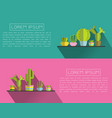 a succulent plants and cactus vector image