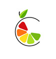 abstract color slice citrus fruits with circle vector image