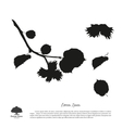 black silhouette branches hazelnuts vector image vector image