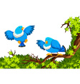 Blue birds on the branch vector image vector image