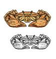 crab seafood animal sea shellfish or crustacean vector image vector image