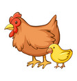 hen and little chick on white background vector image vector image