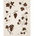 decorative grape vine elements vector image