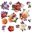 beautiful collection rose flowers vector image vector image