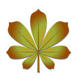 chestnut leaf in autumn vector image vector image