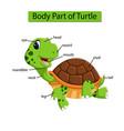diagram showing body part turtle vector image