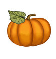 hand drawn watercolor pumpkin vector image