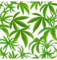hemp plant pattern on white background vector image