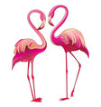 two colorful flamingos looking at each other vector image