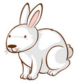 white rabbit on white background vector image