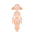 anatomy chart of human skeleton female body vector image